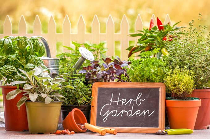 How to Grow Herbs | GardenersPath.com