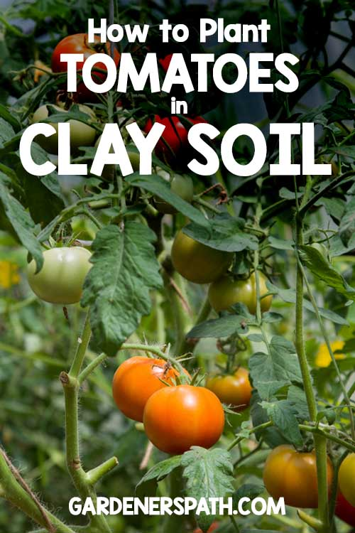 Have Nothing Besides Lumpy, Sticky Red Clay In Your Gardening Spot? Learn  How To