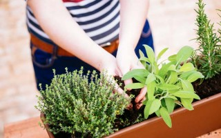 Using containers for your herbs | GardenersPath.com