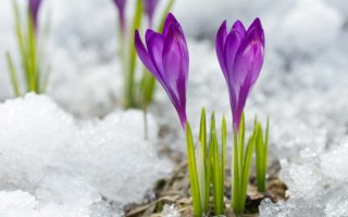 Winter Blooms for Your Garden