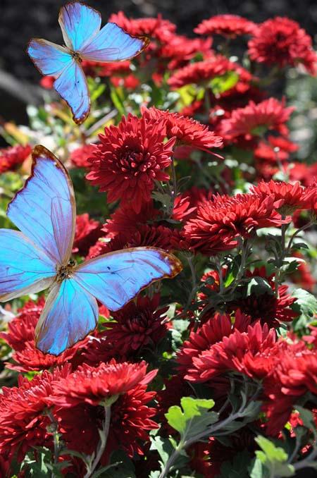Best 6 Perennial Bushes To Attract Butterflies Gardener
