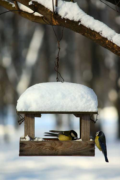 A vertical picture of titmouse birds feeding in the wintertime from a wooden house hanging from a tree, covered in a layer of snow.