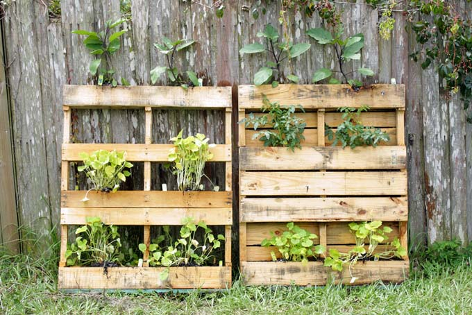 Vertical Gardening With Pallets | http://gardenerspath.com/how-to/design/vertical-gardening-works-everyone/