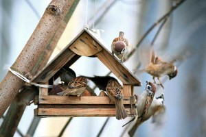 Winter Bird Feeders Entertain as Well as Nourish