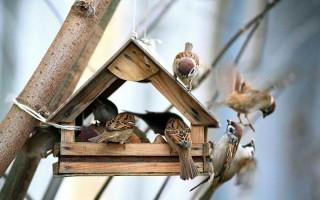 Winter Bird Feeders Entertain as Well as Nourish