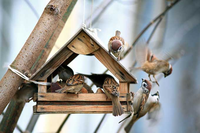 Winter Bird Feeders Entertain as Well as Nourish | Gardenerspath.com