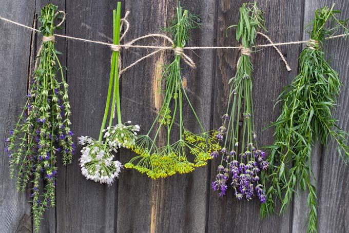 Hanging Herbs to Dry | GardenersPath.com