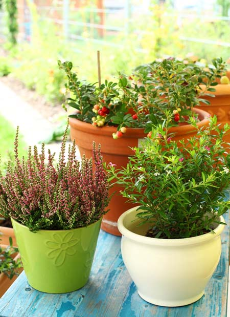 Different types of planters and pots | GardnersPath.com