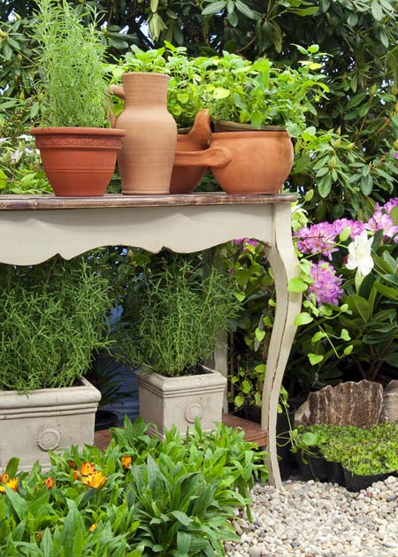 Herb Table Collection | GardenersPath.com