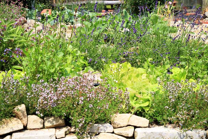 Landscaping with herbs | GardenersPath.com