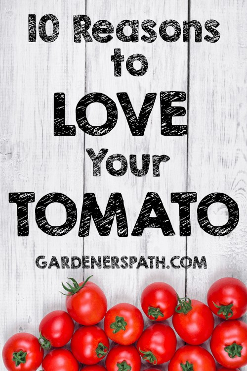 Whether raw or slow-cooked in a fine marinara sauce, tomatoes are one of the best superfoods available. Read why you should love your tomato now here at Gardener's Path: https://gardenerspath.com/plants/vegetables/top-10-reasons-love-tomato/