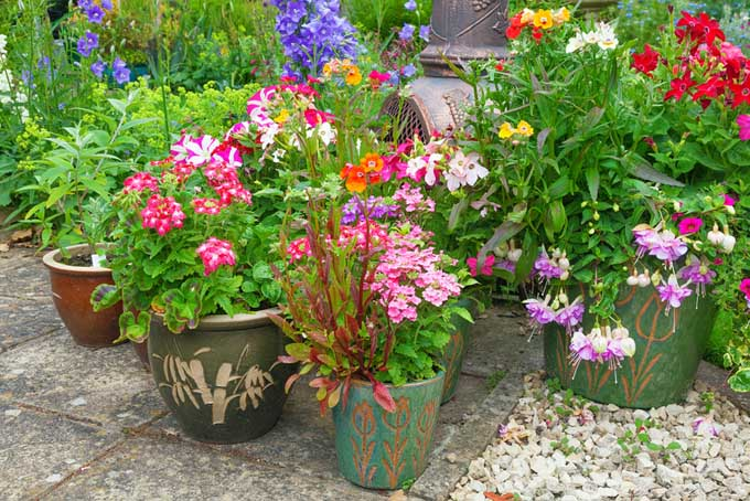 Container gardens are great for packing a lot of punch without much ongoing work | Gardenerspath.com