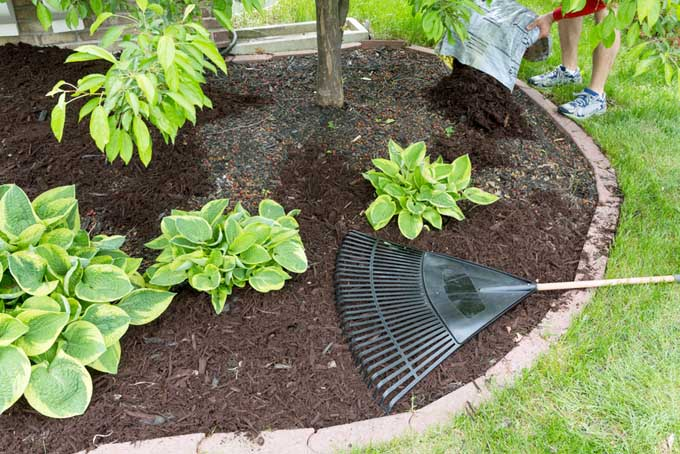 A thick layer of mulch beats a thin layer plus landscaping fabric or plastic | Gardenerspath.com