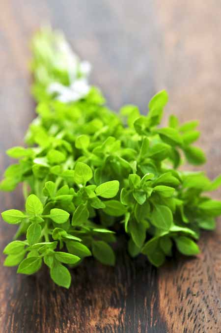 Fresh oregano is great to add to you cuisine | Gardnerspath.com