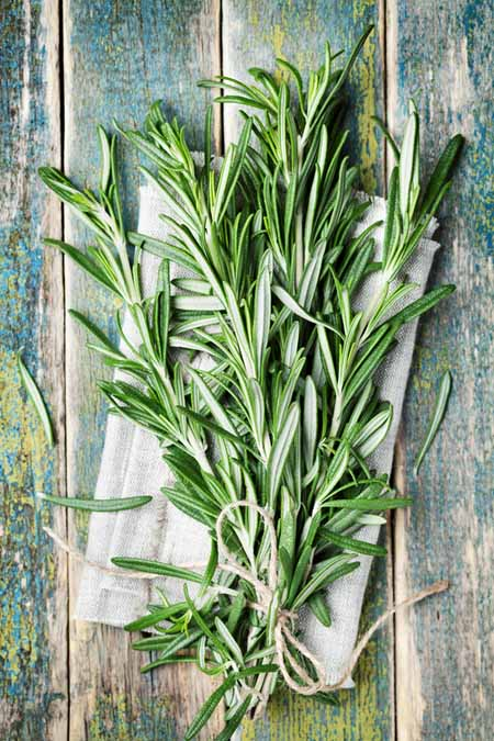A close up vertical picture of a freshly harvested bunch of rosemary, stalks tied together with string, set on a wooden surface.