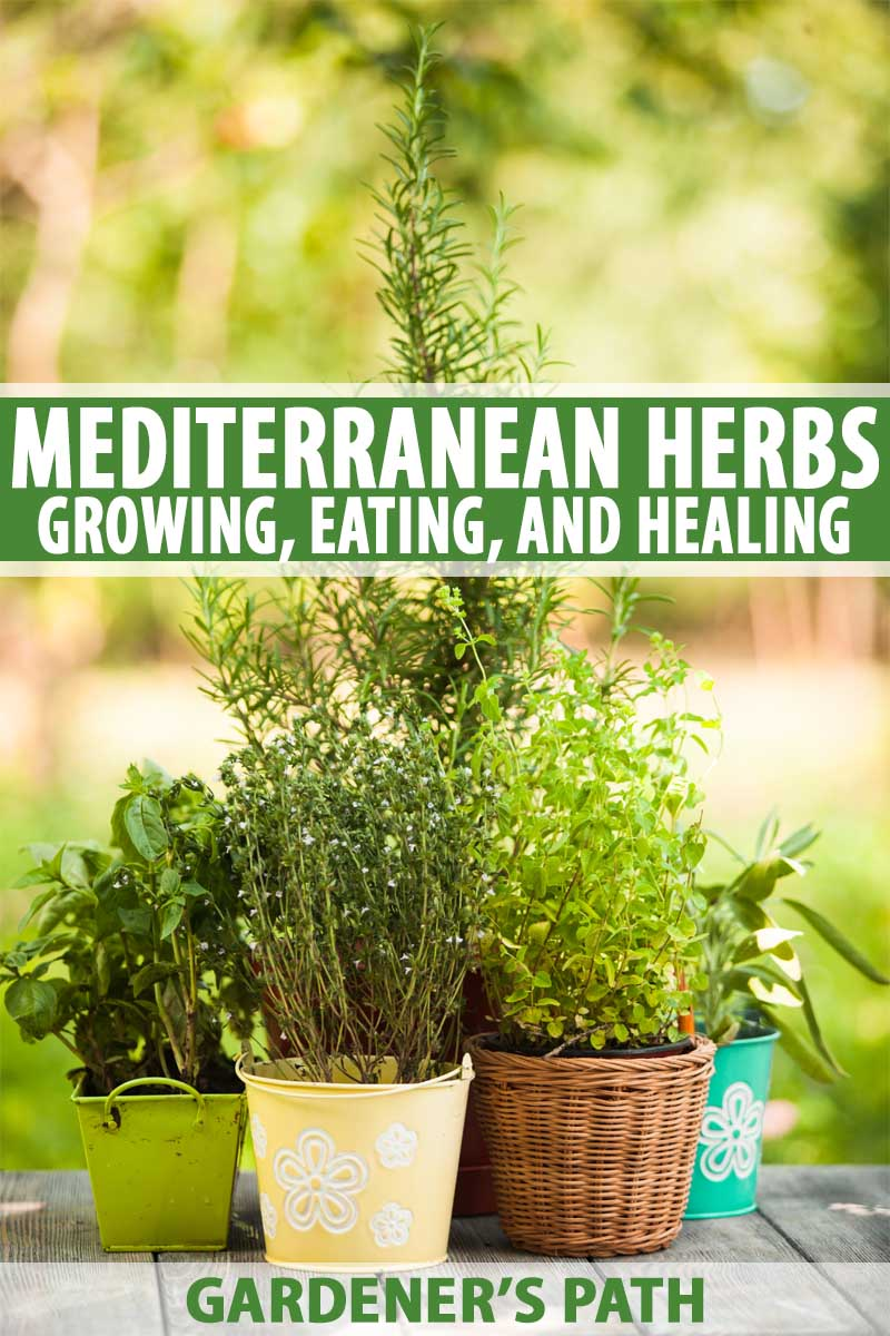 Top 5 Mediterranean Herbs To Grow In The Garden Gardener S Path