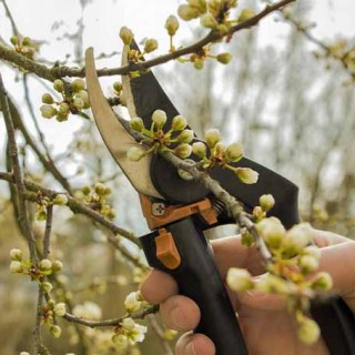 How to Prune Blooming Plants in Spring | Gardenerspath.com
