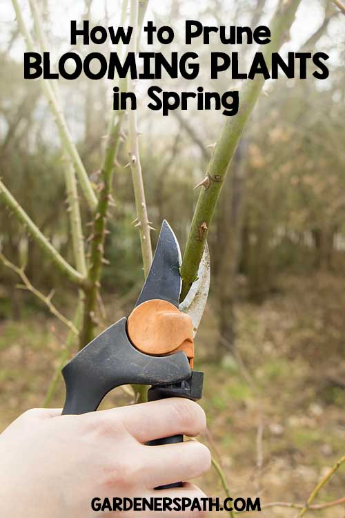 How to Prune Blooming Plants in Spring | Gardenserspath.com