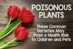 Poisonous Plants: These 11 Common Varieties May Pose a Health Risk to Children and Pets