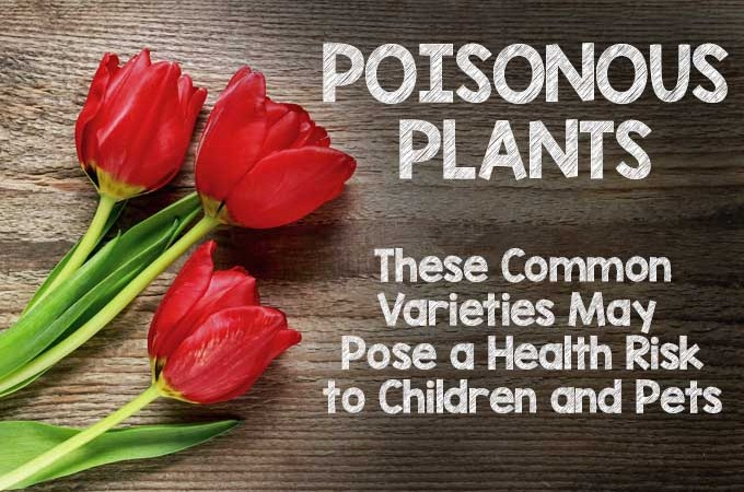 Poisonous Plants: These 11 Common Varieties May Pose a Health Risk to Children and Pets | Gardenerspath.com