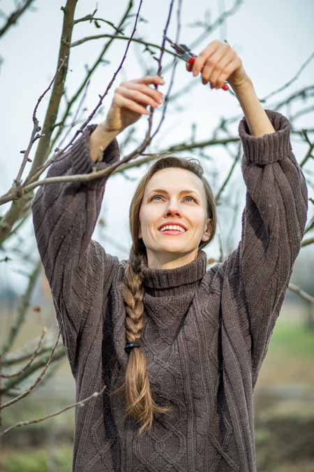 A close up vertical picture of a woman wearing a knitted sweater reaching overhead to prune a dormant plant.