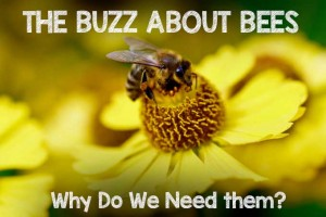 The Buzz About Bees: Why Do We Need Them?
