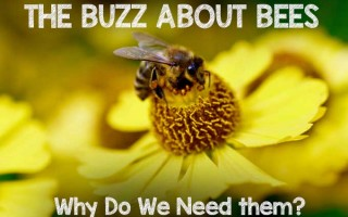 The Buzz About Bees: Why Do We Need Them | Gardenerspath.com