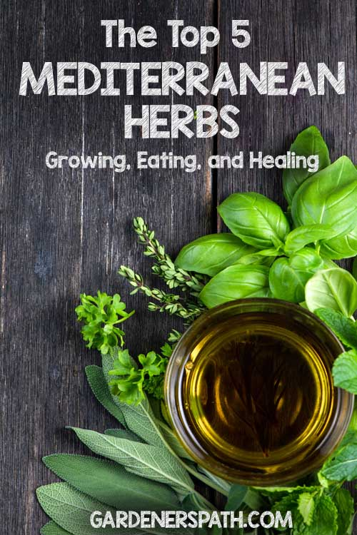What herbs should you start growing in your culinary herb garden? Consider the 5 most common Mediterranean seasoning herbs to start – they're not just easy to plant and harvest, either indoors or out in your garden, they also help to bring out exceptional flavors in your meals while adding natural, healthy healing elements to your foods!