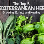 The Top 5 Mediterranean Herbs: Growing, Eating, and Healing | Gardenerspath.com