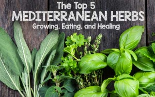 The Top 5 Mediterranean Herbs: Growing, Eating, and Healing