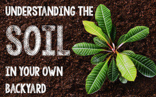 Understanding the Soil in Your Own Backyard