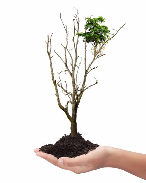 A vertical picture of a hand holding a seedling on a white background.