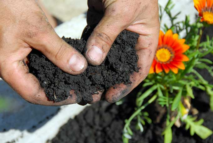 A close up of two hands holding dark, rich soil, with a red flower in soft focus in the background.