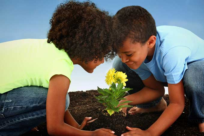 A close up of two children examining a small yellow flower they have just planted in the garden.