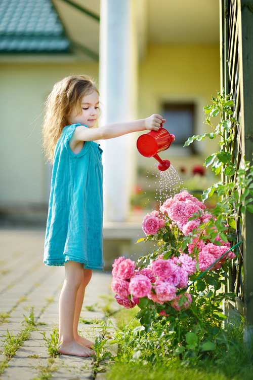 A vertical picture of a little girl wearing a blue dress holding a red watering can and watering a pink rose bush, in light sunshine.