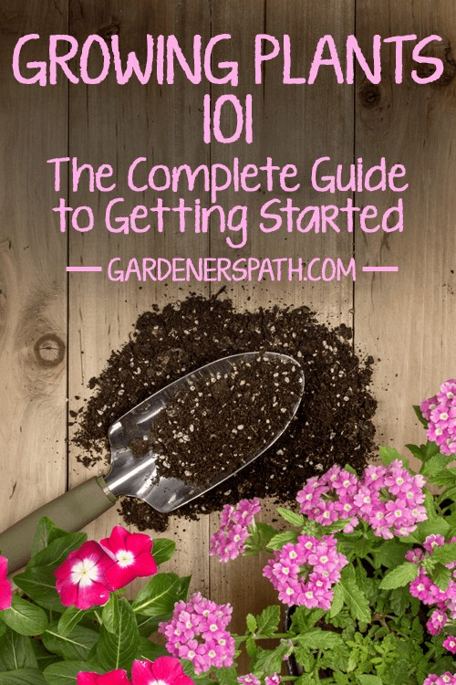 Growing your very own plants is one of the most rewarding experiences there is, whether you have a green thumb...or even a black thumb. Learn everything to get started right here at Gardener's Path: https://gardenerspath.com/how-to/beginners/growing-plants-101/