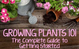 Growing Plants 101: The Complete Guide to Getting Started