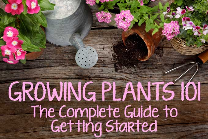 Get started gardening now with this complete guide!