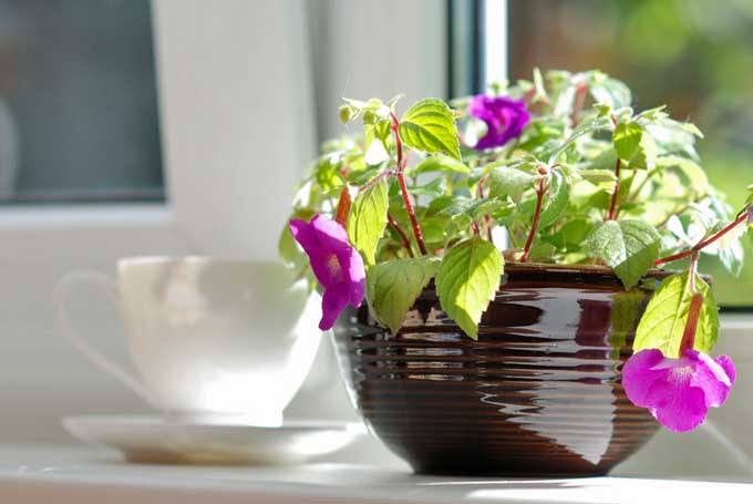 A close up of a brown ceramic pot containing pink flowers set on a windowsill with a tea cup in soft focus in the background.