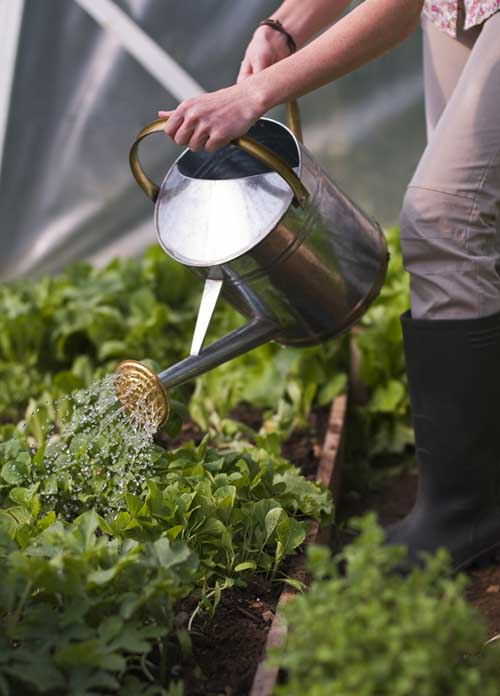 Introduction to Gardening: Watering | Gardenerspath.com