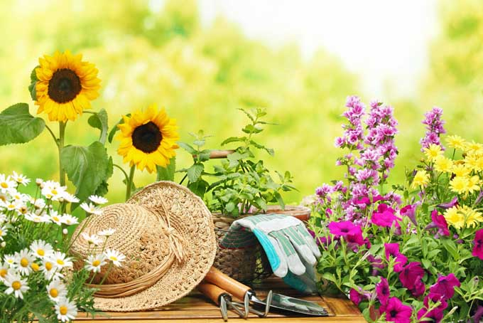 A small table with a straw hat and gardening tools set amongst a variety of flowers in the garden, pictured in light sunshine on a soft focus background.