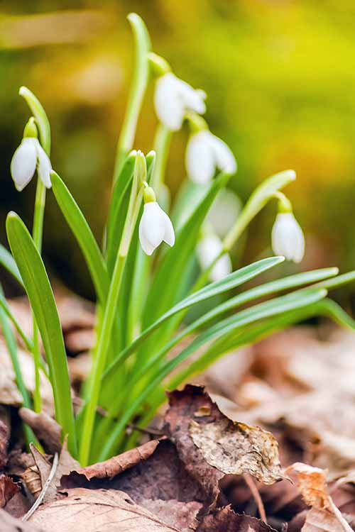 What to do when spring finally arrives? The early part of the season is for getting important chores done in preparation for growing through the summer. Are you ready? Read more on Gardener's Path: https://gardenerspath.com/how-to/preparing-garden-for-spring/.