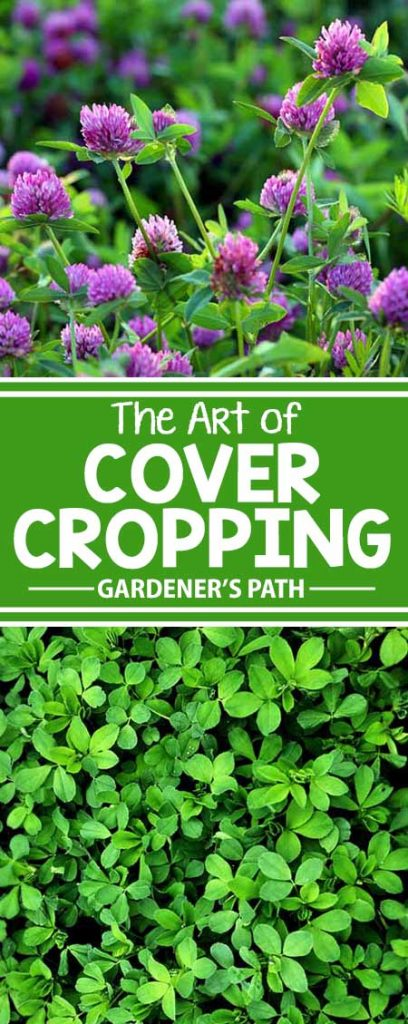 What is cover cropping? Is it right for you, your plants, and your gardening needs? Our simple answer: of course! It might not be as quick as using chemical fertilizers, herbicides, and pesticides – but you'll soon learn that you're saving time and money on both soil building and plant food, all while doing your environment and your garden some huge favors. Read about it now!