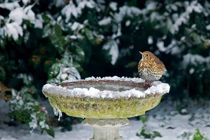 A close up of a stone birdbath in winter, covered in a layer of light snow, with a snowy garden scene in the background.
