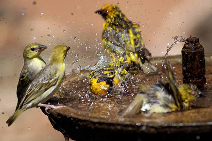 A close up of a bird fountain with a bubbler pictured on a soft focus background.