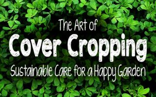 The Art of Cover Cropping: Sustainable Care for a Happy Garden