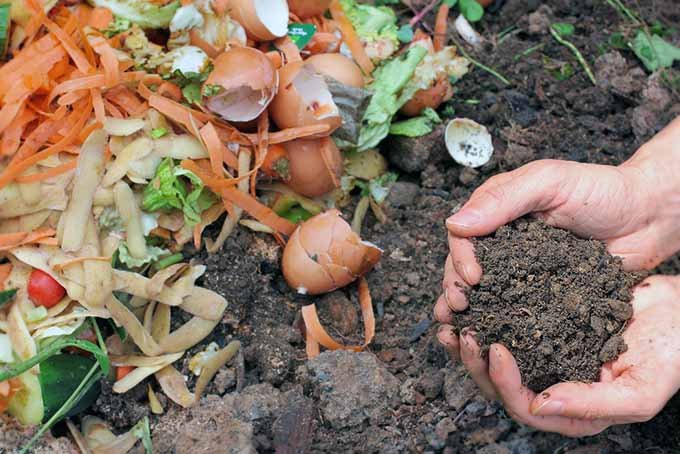 Two hands from the right of the frame holding a handful of compost. To the left of the frame is food waste.