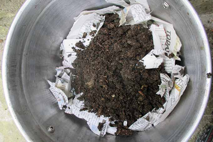 A close up, top down picture of a vermicompost container with carbon lining and soil added