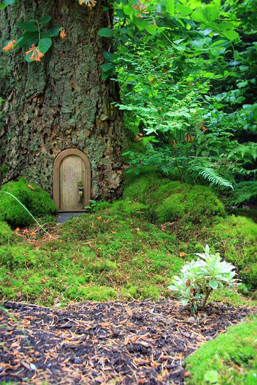 A vertical picture of a large tree with a wooden door in the trunk, surrounded by foliage and moss in a woodland setting.