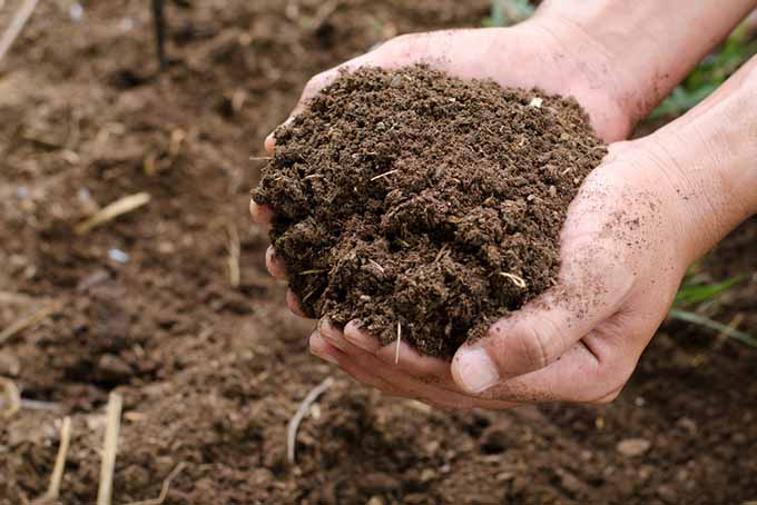 Handful of Soil | GardenersPath.com